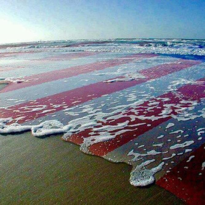 american soil_n